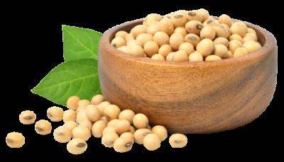 soybean02
